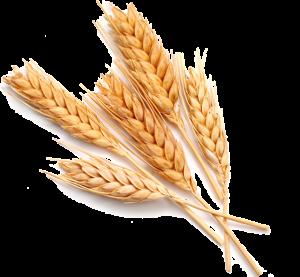 spighe-di-grano-png-2